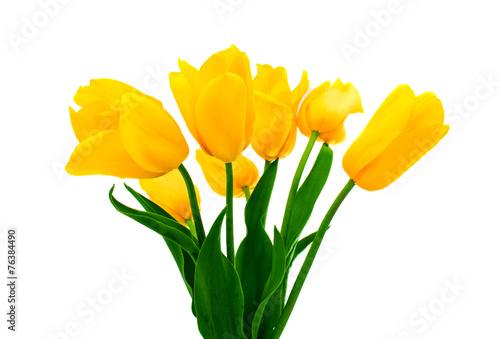 Poster Tulp yellow tulip