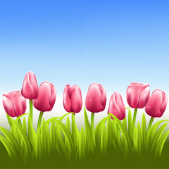 Pink tulips with blue sky vector background
