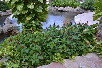 Парк с цветами в Азии