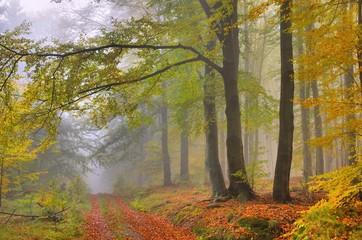 Buchenwald im Nebel - beech forest in fog 08