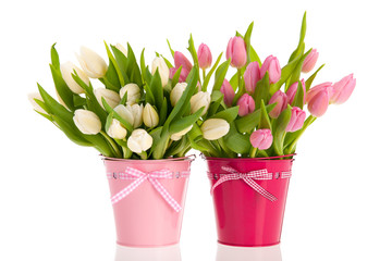 Pink and white tulips in buckets