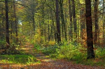 Wanderweg - hiking trail 11
