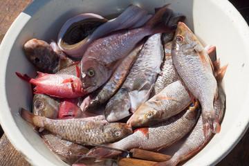 Fresh Fish selling in Santa Maria Beach in Cape Verde