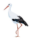 illustration of stork