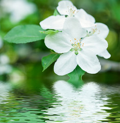 white flower reflected in water