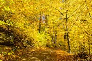 path guiding through beautiful autumn park
