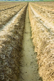Ditch of rainwater collection in a plowed field poster