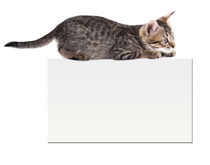 Little kitten with empty card isolated on white