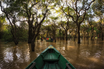 Canoe in Tonle Sap Mangrove Forest