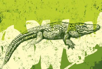 Alligator texture background