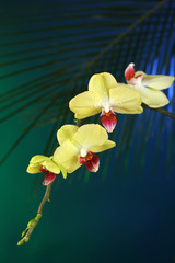 Orchid flowers on dark colorful background