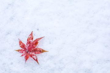 雪の上のカエデの紅葉