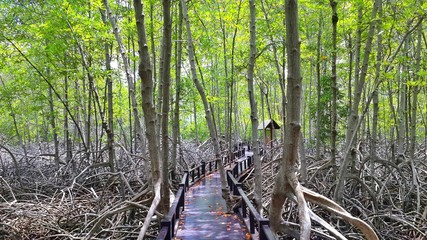 Wooden path in mangrove national park