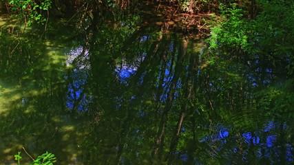 Green Krka River