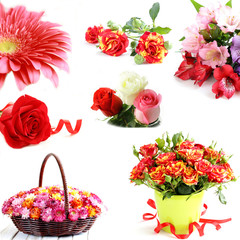 collage of different flowers on a white background