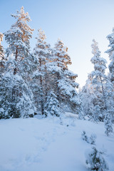 Snowy forest at winter