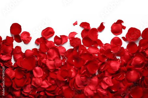 In de dag Rozen Rose petals