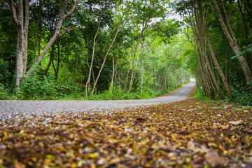 dried leaves on road with tree tunnel