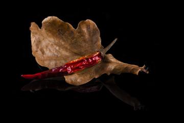 Herbstliches Eichenblatt mit alter Pepperoni