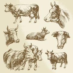 cows, farm animal - hand drawn collection