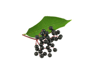Elderberries and leaf