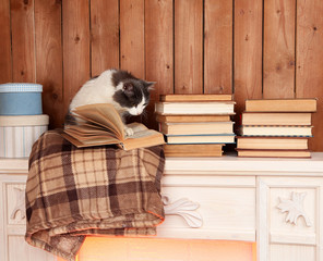Cute cat sitting with book on plaid