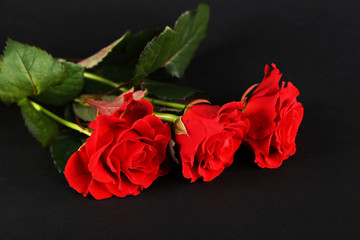 Bouquet of wonderful red roses on dark background