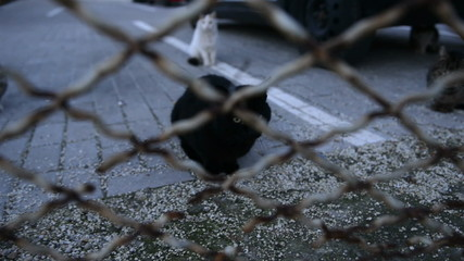 Dirty street cats trough steel fence