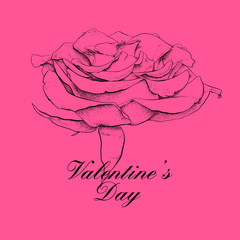 Valentines day design with rose