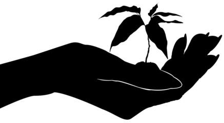 main féminine ouverte, plant d'arbre