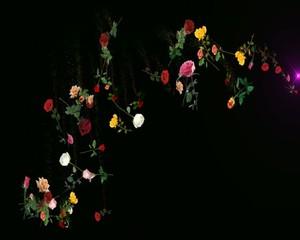 розы   россыпь