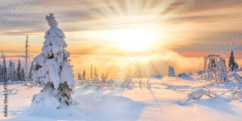 Sunray in Winter - 76428260