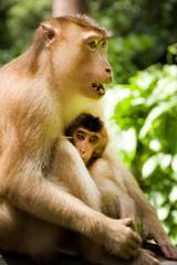 お猿の親子 動物
