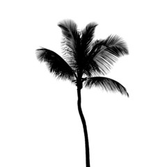 Black silhouette of coconut palm tree isolated on white