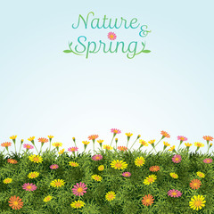 Flowers Spring Field Season Background