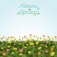 Flowers Spring Field Season Background