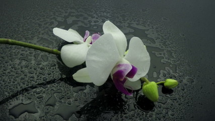 falling orchid slow motion