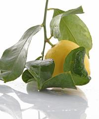 Citron et feuillage