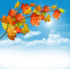 Autumn foliage. Golden Autumn.