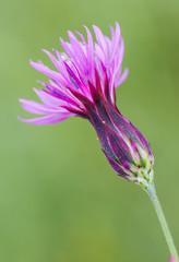 flor morada fondo verde