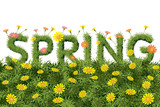 Fototapety Flowers Spring Field Season Background with Word
