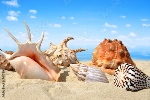 Conch shells on beach - 76433048