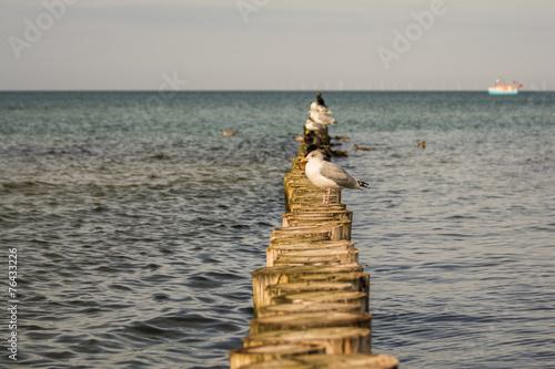 canvas print picture Wasservögel auf Darss