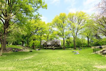 新緑のセントラルパーク
