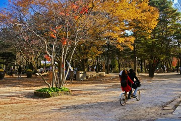 Couple ride bicycle for 2 riders at Nami Island, Korea.
