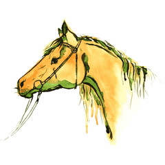 Watercolor painting horse