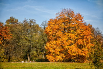 Bench in the park on a background of huge autumn trees