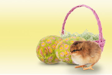 Baby chick with easter eggs and basket
