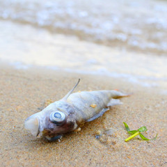 Dead fish on the beach. Water pollution concept.
