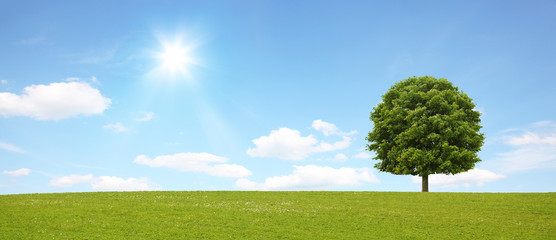 Panorama mit Baum
